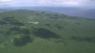Flying over large palm oil plantation near coast