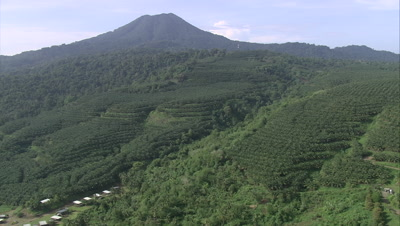 Fly over Palm Oil plantation towards jungle and mountain