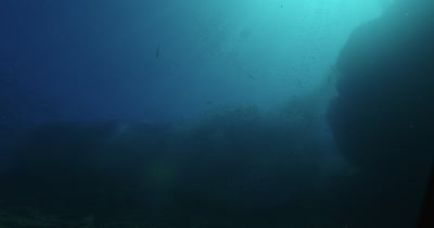 Low angle of large school of fish near surface. Sea lion enters frame.