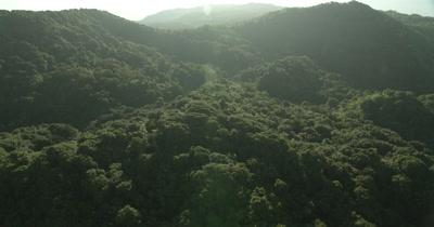 Flying over treeline