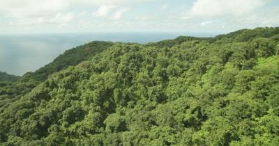 Tilt down and fly over island's rainforest