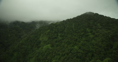 Flying over rainforest into clouds that are covering the trees