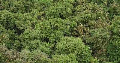 Bird's eye view scanning top of island