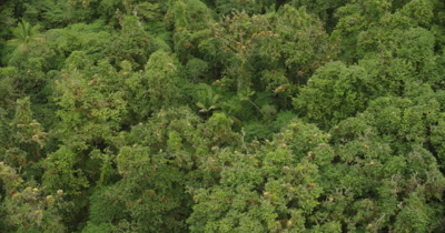 Bird's eye view scanning top of rainforest on island