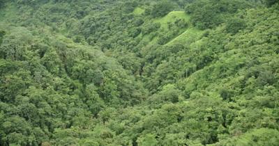 bird's eye view of rainforest on island