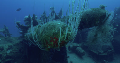 Coral growing on canons of USS Lamson.