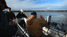 Bristol Bay Salmon Fishery - Setnetters Pull Net And Fish Into Skiff