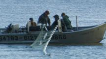 Bristol Bay Salmon Fishery - Fishermen Haul Net And Pick Fish From Setnet Skiff