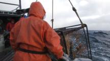 Crab Fishing Bering Sea - Deckhand Falls As Fishermen Raise Crab Pot Full Of Opies