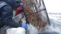 Crab Fishing Bering Sea - Fishermen Raise Crab Pot Full Of Opies, Ice And Waves Toward Camera