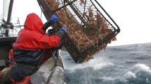 Crab Fishing Bering Sea - Fishermen Raise Crab Pot Full Of Opies, Icy Deck