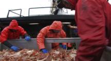 Crab Fishing Bering Sea - Fishermen Sort Crab At Table, Opies