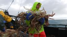 Crab Fishing Bering Sea - Fisherman Carries Hand Full Of Crab To Hopper, Fast Action