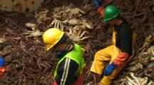 Crab Fishing Bering Sea - Workers From Processor Pitch King Crab Into Brailer For Offloading