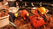 Crab Fishing Bering Sea - Workers Pitch Opilio Crab Into Totes For Offloading