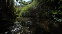 Brown Bear Habitat And Scenics Of Katmai Alaska - Low Angle Of Salmon Stream Flowing Through Grass And Alder
