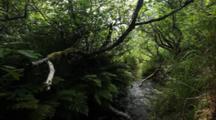Brown Bear Habitat And Scenics Of Katmai Alaska - Beautiful Salmon Stream Flowing Through Grass And Alder