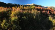 Brown Bear Habitat And Scenics Of Katmai Alaska - Beautiful Grass And Fireweed Early Fall Colors