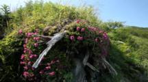 Scenic Shot Of Alaska Peninsula - Beautiful Wildflowers And Grass Near Beach