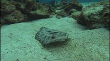 Sand Dab Over Sandy Reef