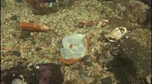 Middens Heap Near Giant Octopus Den