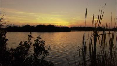 Everglades Stock Footage