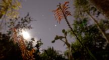 Time Lapse, Moon Sets Behind Trees