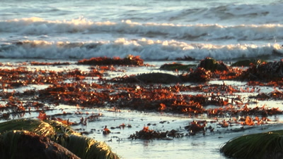 Red Seaweed Washes Up On Shore