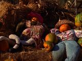 Pumpkins, Fall Decorations