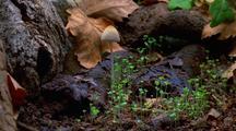 Time Lapse Mushrooms Growing