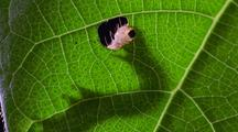 Stock Footage of Plants with Insects