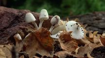 Mushrooms Emerge In Time-Lapse