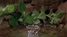 Slow Motion Water Drop Falling, Splashing In Pond