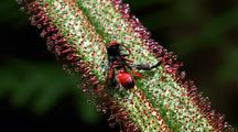 Wasp Caught By A Carnivorous Plant