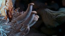 Timelapse Of Mushrooms Drying