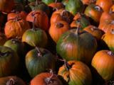 Variety Of Pumpkins On Display