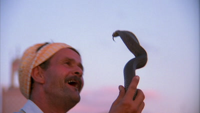 Stock Footage of Reptiles with People