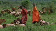 Masai Women Herd Livestock