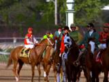Jockeys And Horses Led By Others