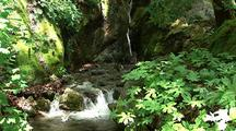 Waterfall And Creek In Forest, Big Sur