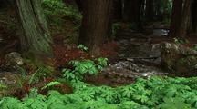 Creek Runs Through Forest, Big Sur