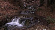 Creek Running In Forest, Big Sur