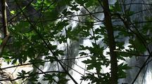 Waterfall Through Trees, Big Sur