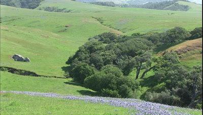 Ranch Land With Wildflowers