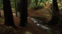 Walking Next To Creek In Forest