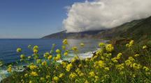 Coastal View With Wildflowers In Foreground