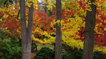 Panorama Of Trees With Red And Yellow Fall Colors