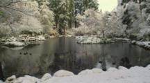 Ducks In A Pond In Winter