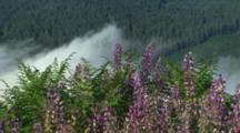 Fog In Hills With Lupine In Foreground