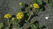 Yellow Wildflower, Close Up